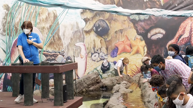 Cabrillo Marine Aquarium newly reopened touch tank with new mural painted on back wall